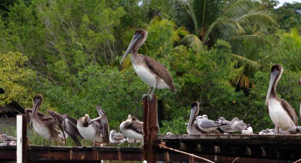 Rio Dulce Boat Tour - Bird Watching in Guatemala