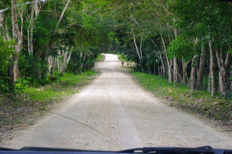 The road to Yaxha Mayan Ruins