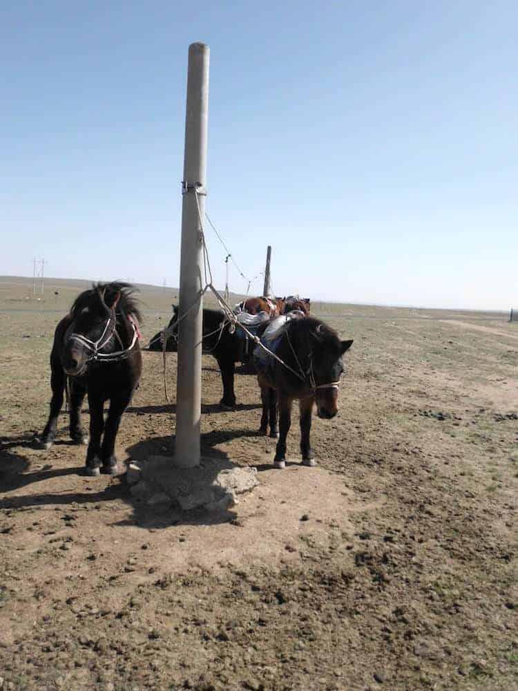 Horseback Riding Inner Mongolia China