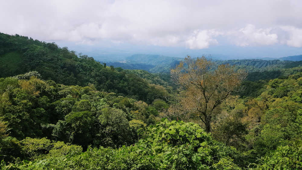 Guatemala land of many trees