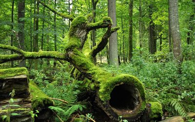 Bialowieza Forest Poland - Best Nature in Europe