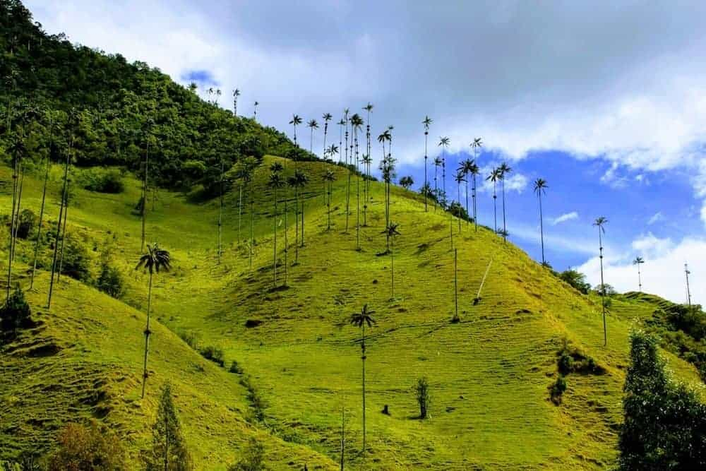 Cocora Valley - Backpacken Colombia - Reisadvies en Bezienswaardigheden - Only Once Today