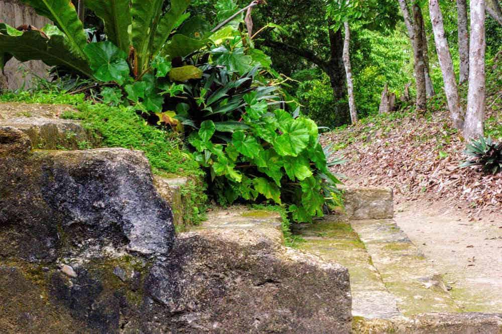 Stairs at Mayan Ruins Yaxha in Guatemala