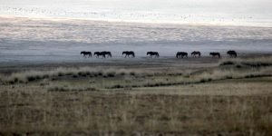 Horses on the grasslands of inner Mongolia