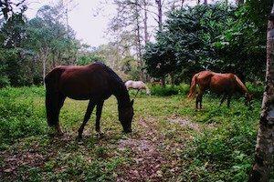 Horses at Finca Ixobel