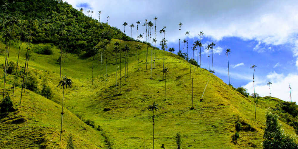 View during the Cocora Valley hike