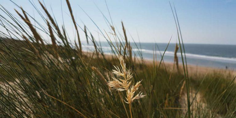 De Haan Beach as seen from the dunes