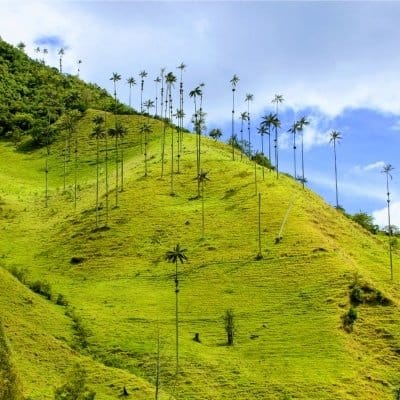 Colombia Itinerary - Salento - Valle del Cocora - Only Once Today